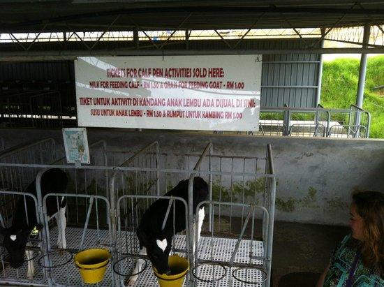 Desa Dairy Farm: feeding pricelist...
