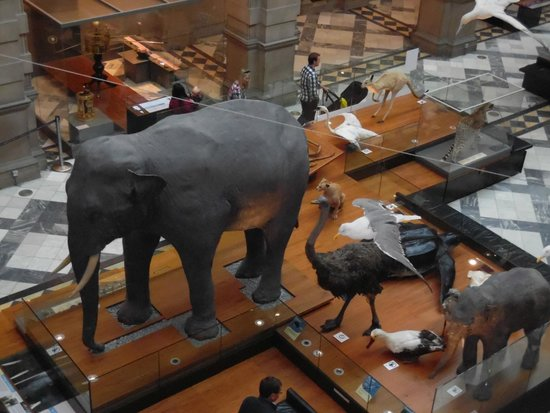 Kelvingrove Art Gallery and Museum : roger the elephant
