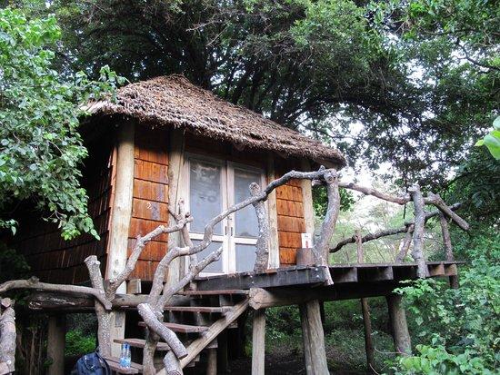 andBeyond Lake Manyara Tree Lodge: Our lodge
