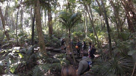 EcoZip Adventures: EcoZip - Bush walk back to base