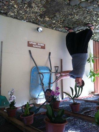 Rumah Terbalik: Upside down garden