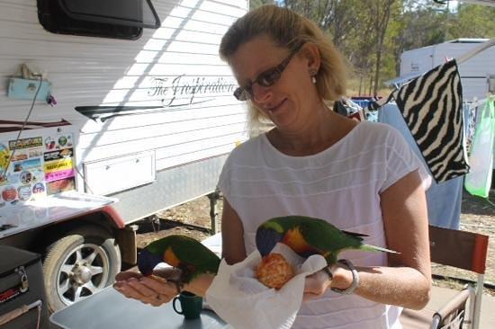 Lake Maraboon Holiday Village: lovely bird life