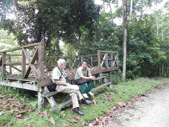 Borneo Rainforest Lodge: Chatting with the bird guide