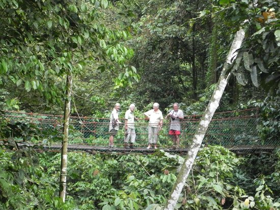 Borneo Rainforest Lodge: A walk close to the lodge