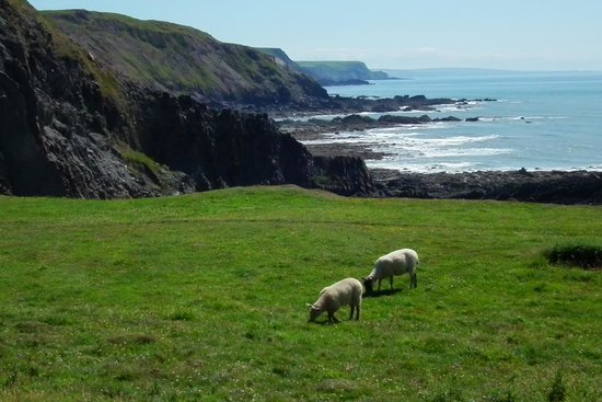 Copps Castle Bed and Breakfast: The coast, a short drive from Copps Castle