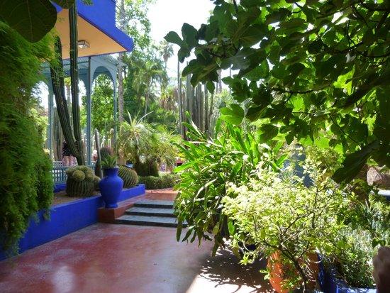 Jardin Majorelle : un havre de paix