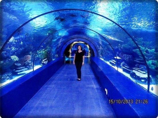 Antalya Akvaryumu - Picture of Antalya Aquarium, Antalya ...
