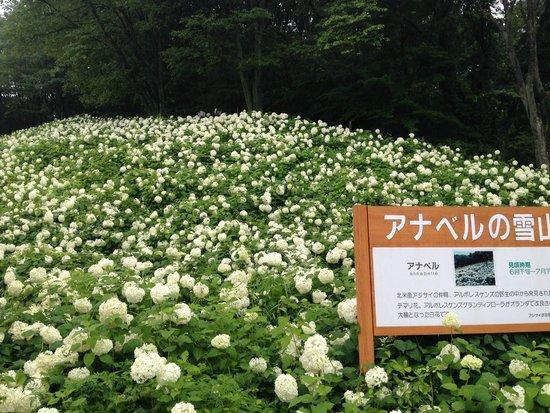 Tokyo Summer Land: アナベル