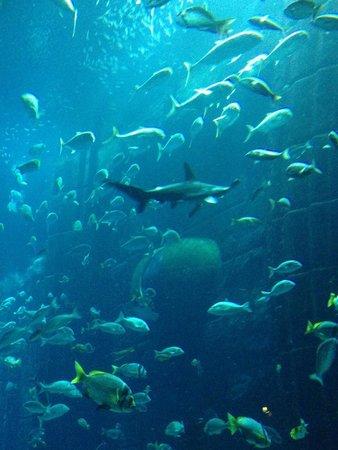 Atlantis, The Palm: Acquario all'interno dell'albergo