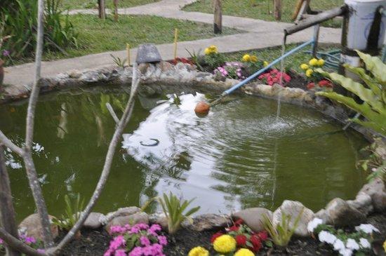 Lychee Garden Bungalow: Garden