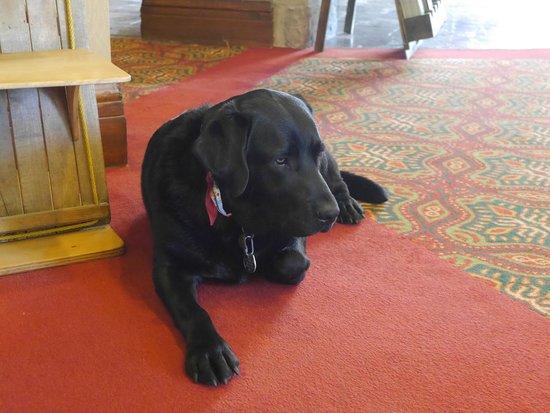 Fairmont Tremblant : Umi the hotel dog