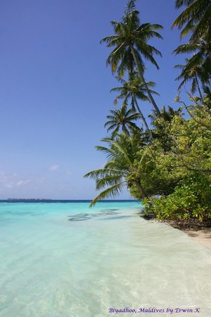 Biyadhoo Island Resort : Beach