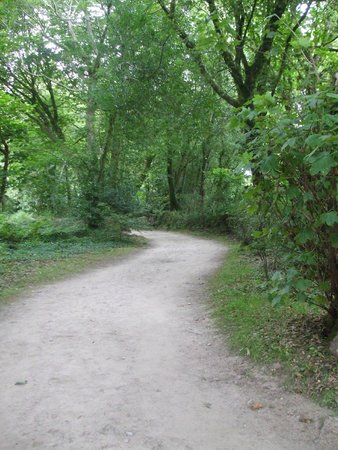 The Lost Gardens of Heligan : woodland walk
