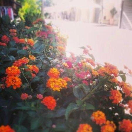 Hotel Nuova Italia: I nostri fiori