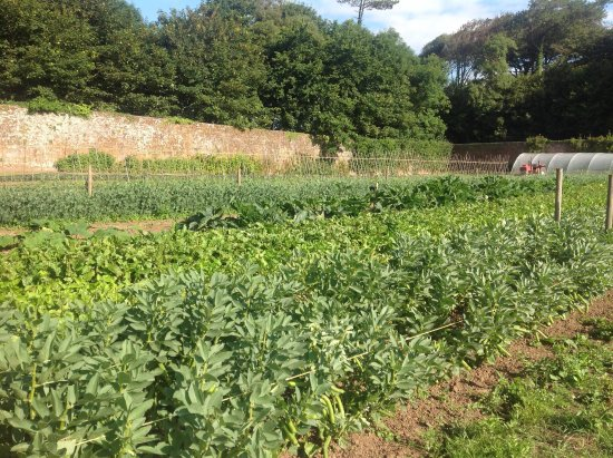 Stackpole, UK: Vegetable rows