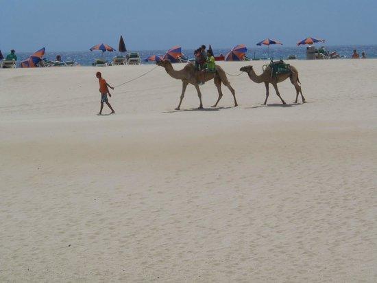 ClubHotel Riu Oliva Beach Resort : Playa