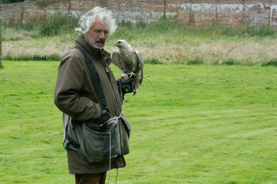 Lakeland Bird of Prey Centre: Falconer with falcon during display
