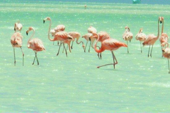 Holbox Hotel Mawimbi: Flamingos