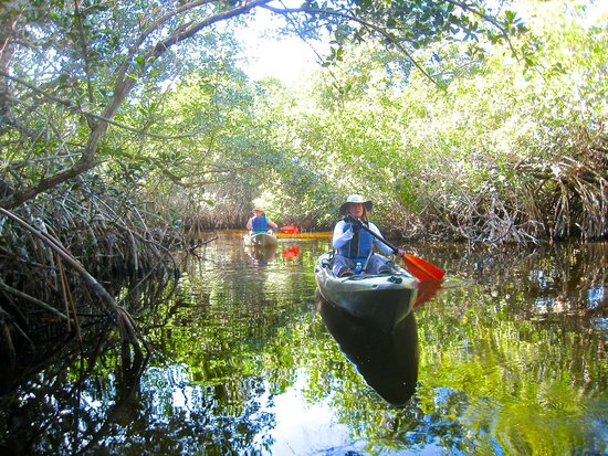 Shurr Adventure Company Day Tours: Mangrove Tunnels