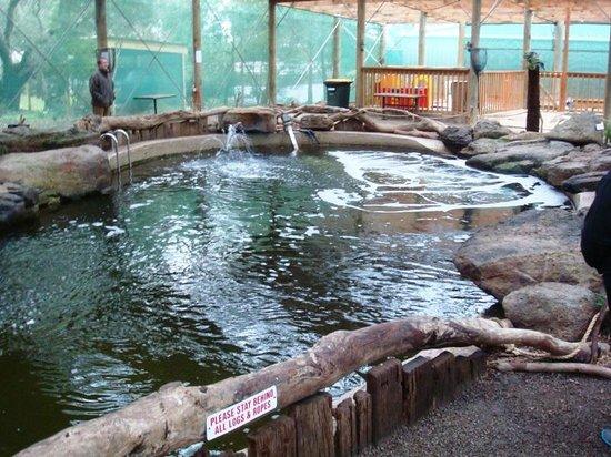 Rhyll Trout and Bush Tucker Farm: Indoor rainforest pool
