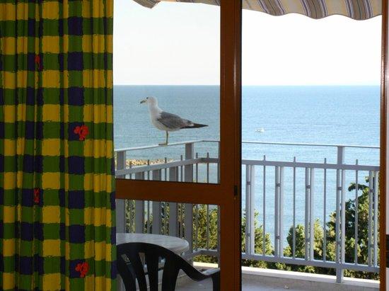 Sol Nessebar Bay: Такие гости здесь не редкость