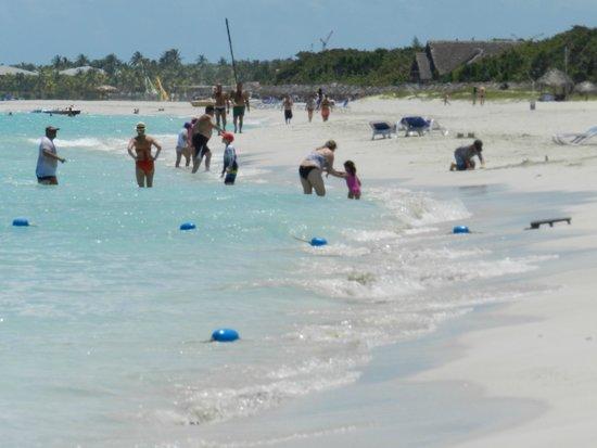 Blau Varadero Hotel Cuba: Plage