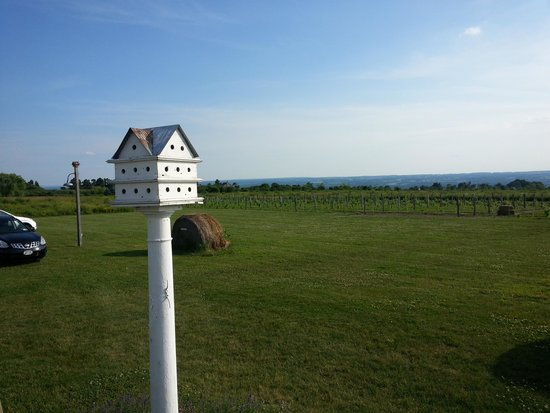 Experience! The Finger Lakes Tours: view from Pumpkin Bistros