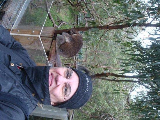 Phillip Island Nature Parks - Koala Conservation Centre: Sleeping Koala 3