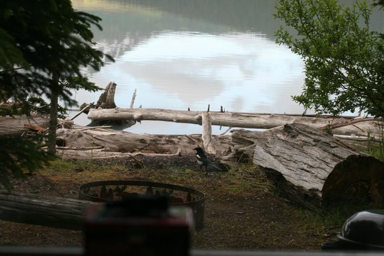 Renfro's Lakeside Retreat: View from cabin