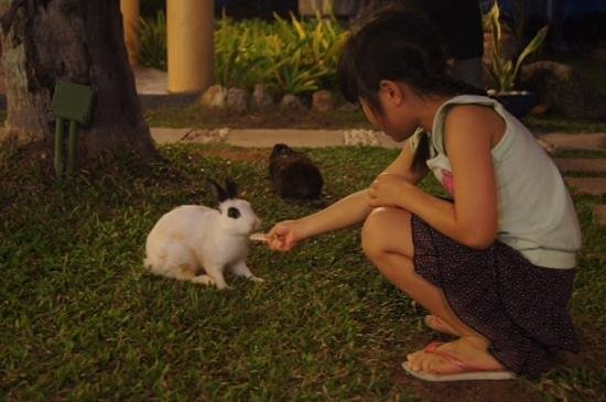Thavorn Palm Beach Resort: The resident rabbits finally came out to play!