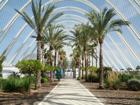 City of the Arts and Sciences: аллея
