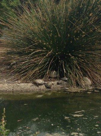 Parque De La Paloma : Sunbathing tortoises!