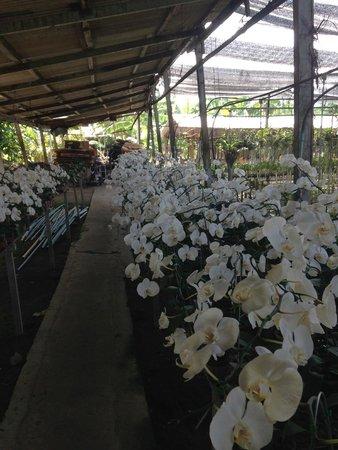 Phuket Orchid Farm : Orchid farm