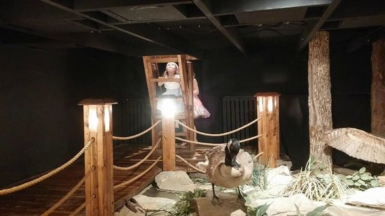 Children's Museum of Oak Ridge: birds exhibit