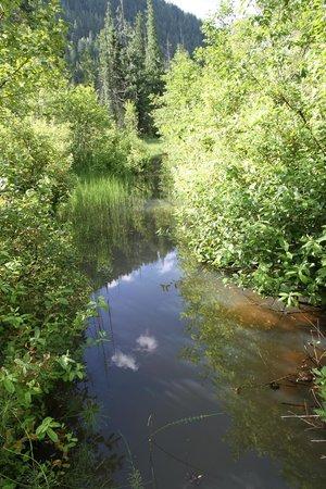 Skunk Cabbage Boardwalk: The marsh
