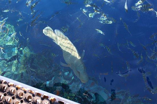 Sea Gardens: Рыбы возле понтона