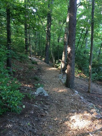 Holiday Inn Asheville - Biltmore East: Dogwood Trail on property