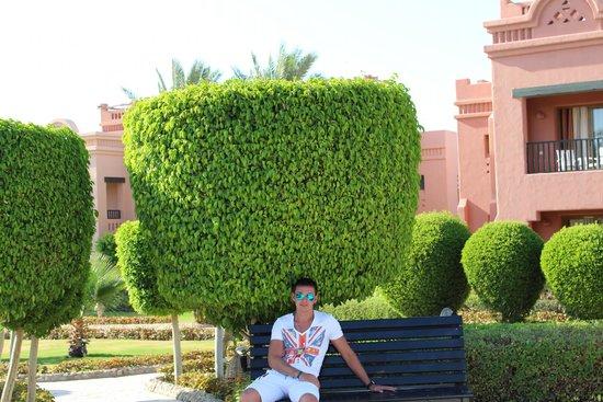 Sea Gardens: Территория отеля
