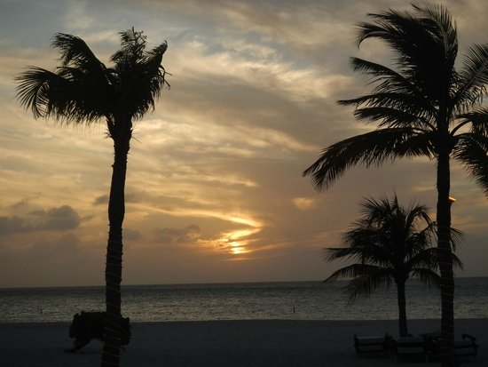 Bucuti & Tara Beach Resort Aruba: Palm trees on the beach