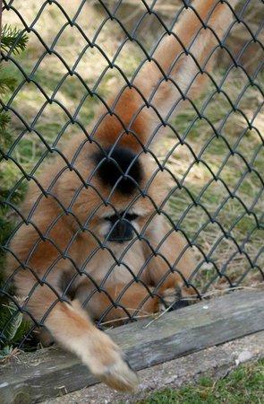Twycross Zoo : Tiny Enclosure