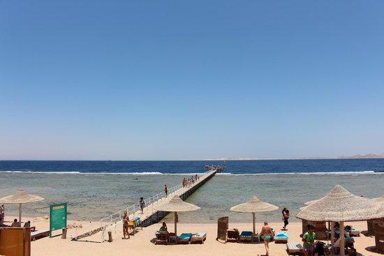 Sea Gardens: Пляж