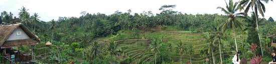 Tegalalang Rice Terrace : The scenic rice terrace