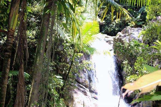The El Yunque Rain Forest : El Yunque Rain Forest, Puerto Rico