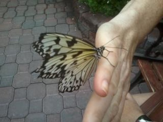 Newfoundland Insectarium : Butterflies even land on you!