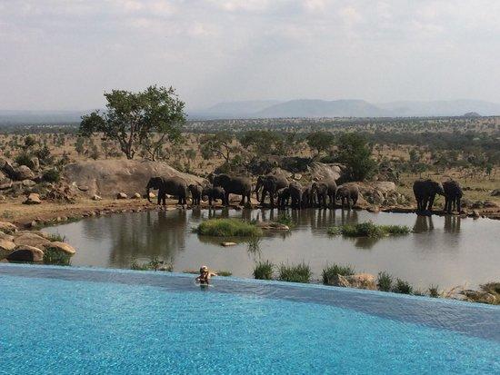 Four Seasons Safari Lodge Serengeti: The view from the Four Seasons Safari Lodge pool
