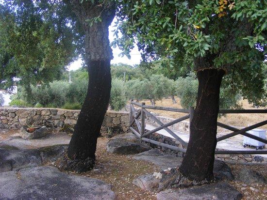 Barretos, โปรตุเกส: Oak trees in garden