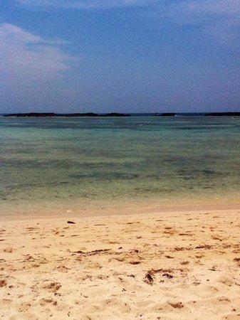 Paradise Cove : Dead Man's Reef