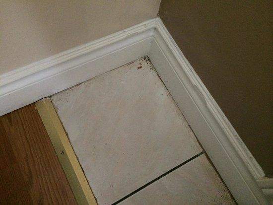Super 8 Cambridge/Kitchener/Waterloo Area: Bedroom filth