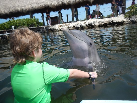 "Dolphin Research Center : Shaking ""hands"" with a dolphin"