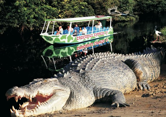‪Crocodile Express Daintree River Cruises‬